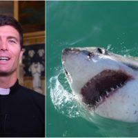 svećenik, velika bijela psina, morski pas